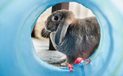 Chasing The Digital Rabbit
